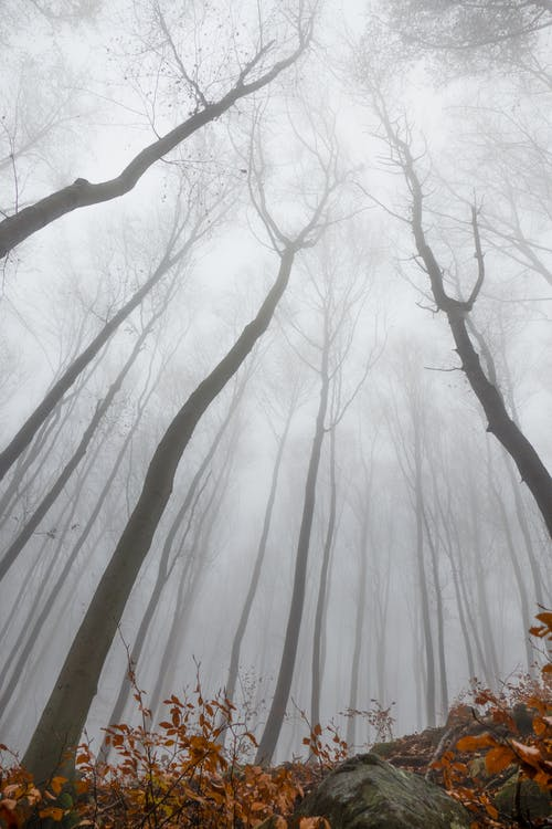 From below of tall leafless trees placed in foggy autumn forest in daytime