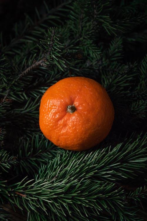 Orange Fruit on Green Pine Tree