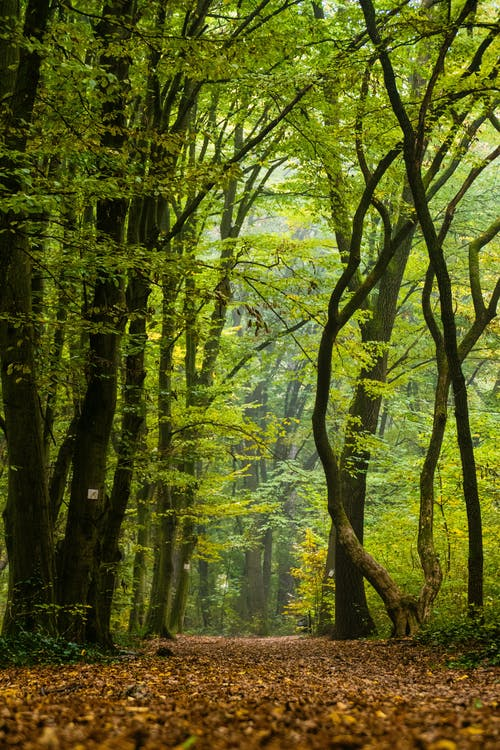 Green trees growing in forest with autumn foliage on ground