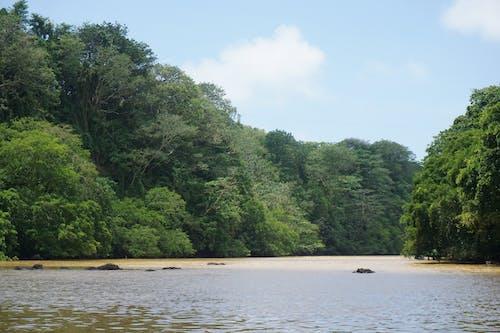 Безкоштовне стокове фото на тему «Денне світло, джунглі, зелений, маврикій»