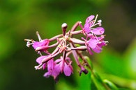 Selective Focus Photography of Purple Petal Flowers