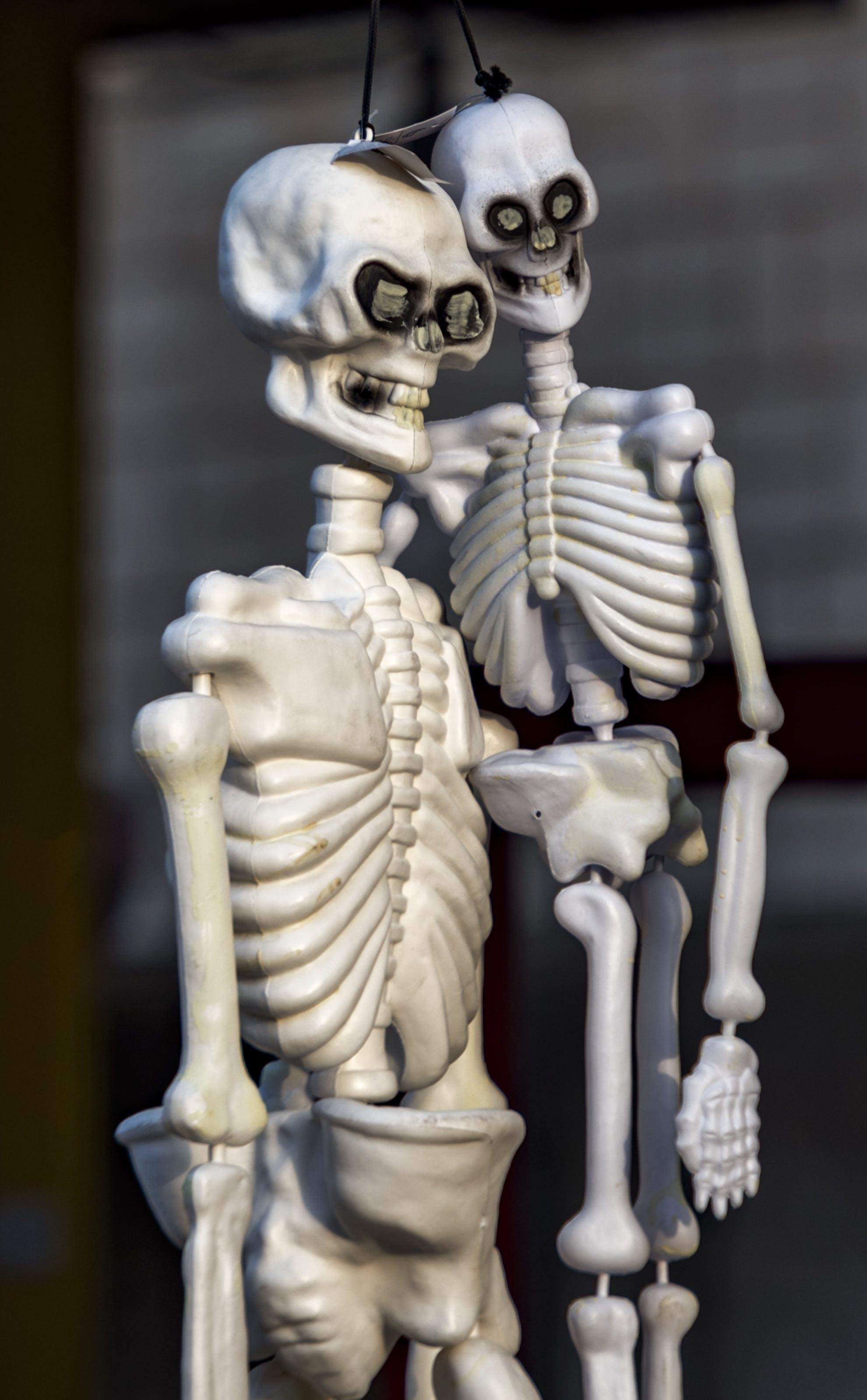 Free stock photo of halloween, scary, skeleton