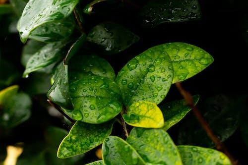 Капли воды на зеленых листьях