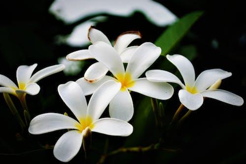 Foto profissional grátis de aumento, broto, delicado, flor