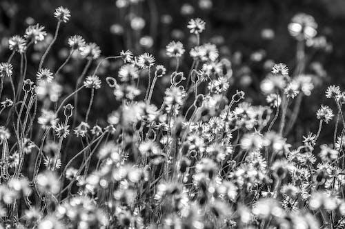 Bahçe, bitki örtüsü, büyüme, Çiçek açmak içeren Ücretsiz stok fotoğraf