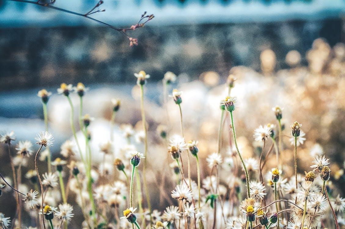 bane, blomst, blomster