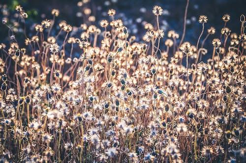 Gratis arkivbilde med åker, anlegg, blomst, blomster