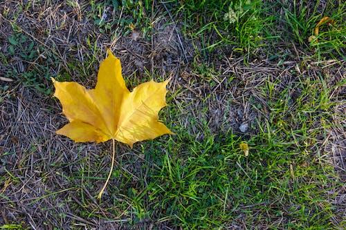 Gratis lagerfoto af baggrund, efterår græs, efterårsblade, græs