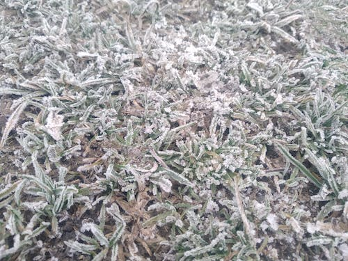 Free stock photo of cold, cool, frosty