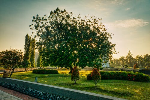 Park with lush green tree