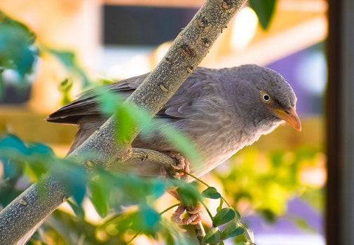 Gray Bird Perched On Tree Branch