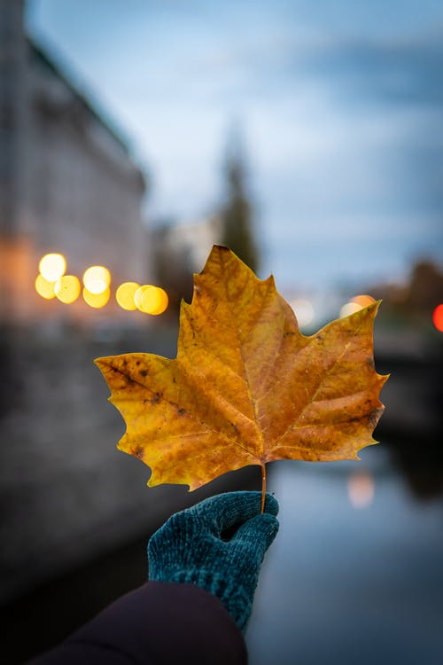 Fotos de stock gratuitas de Acción de gracias, al aire libre, árbol