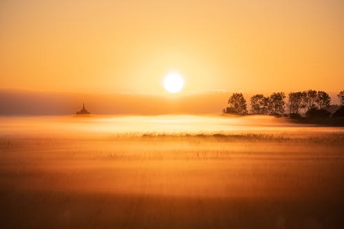 Picturesque scenery of field covered with fog against trees illuminated by sunlight at sunrise time