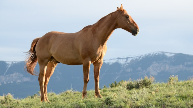 Brown Horse On Grass Field