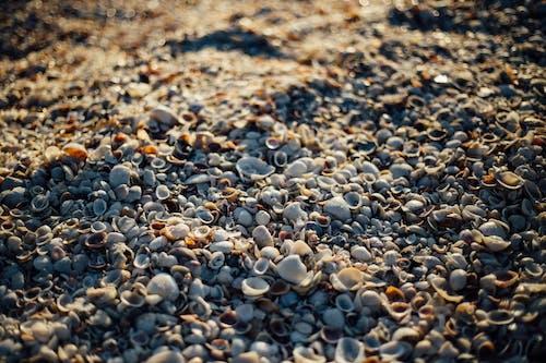 Kostenloses Stock Foto zu küste, meer, muscheln, sand