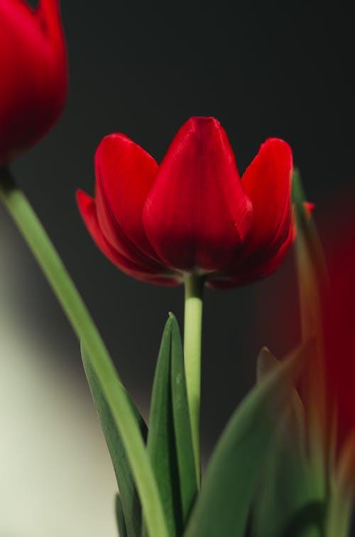 Foto stok gratis alami, aroma, bagian