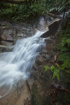 Green Bush in Water Fall