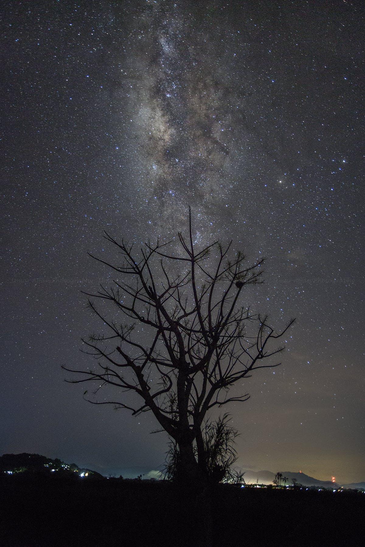 Foto d'estoc gratuïta de arbre, astronomia, constel·lació, estrelles