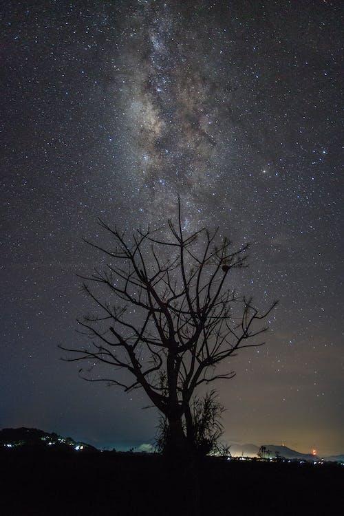 Ảnh lưu trữ miễn phí về cảnh đêm, cây, chòm sao, dãi ngân Hà
