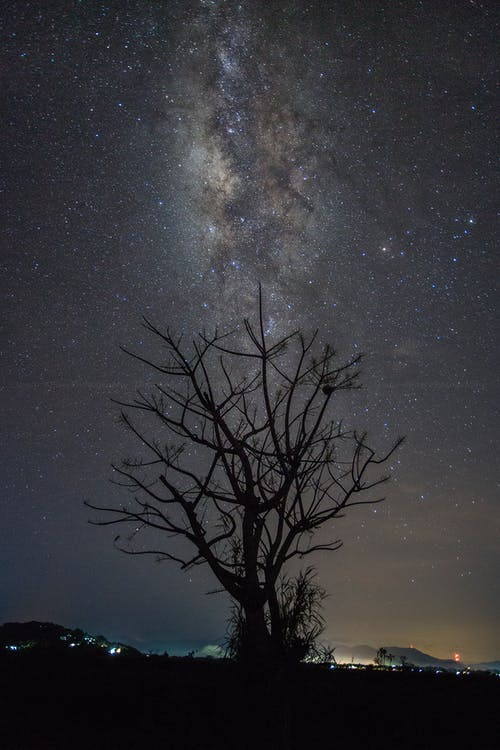 Silhouette of Tree at Night