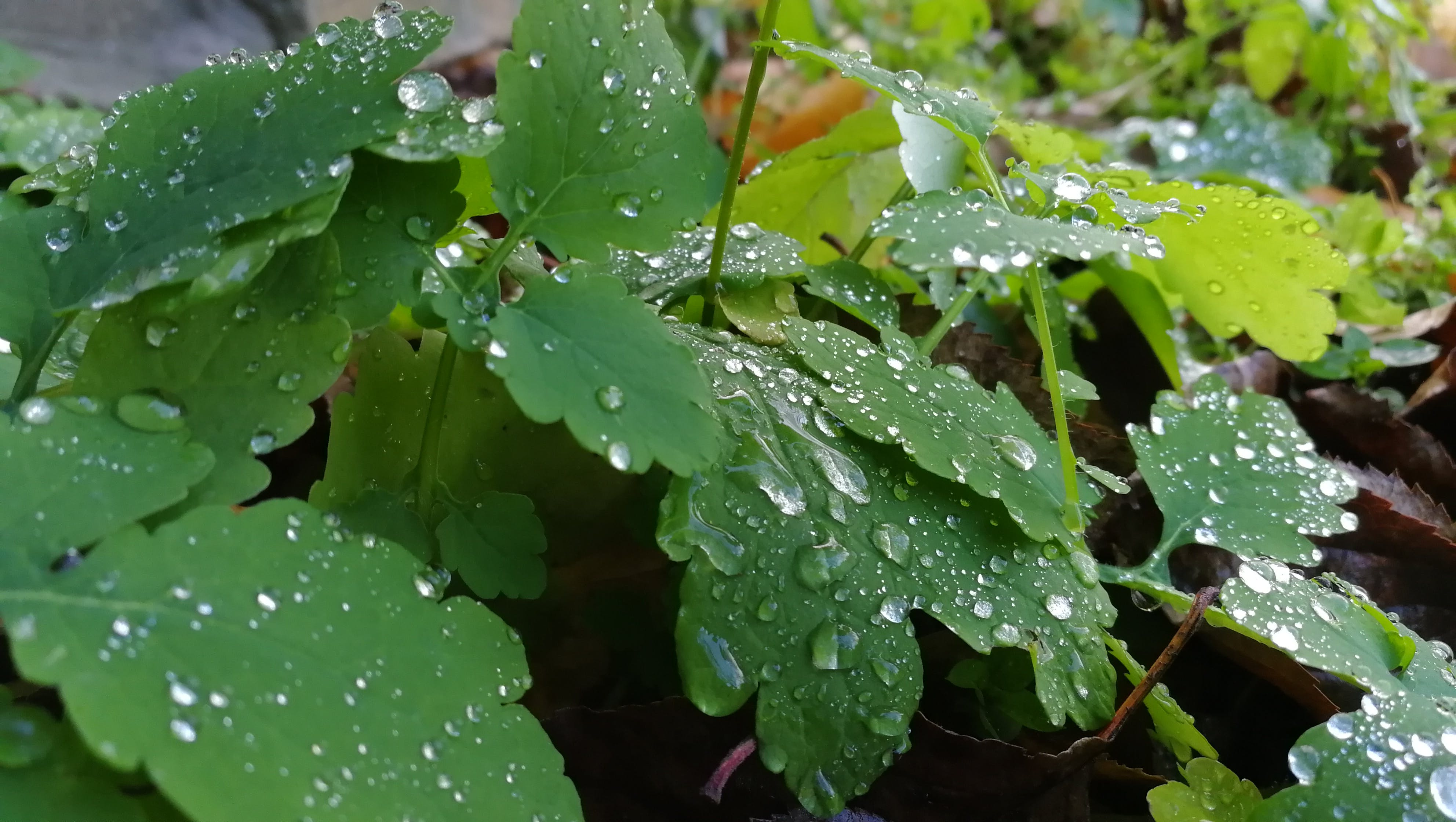 Free stock photo of natue