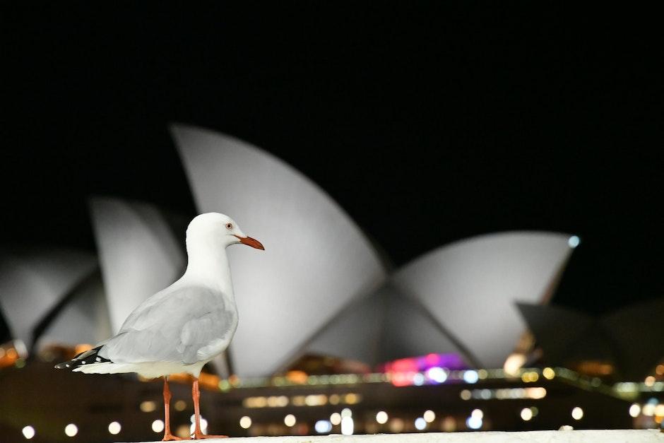 White Bird With View Of Sydney Opera House