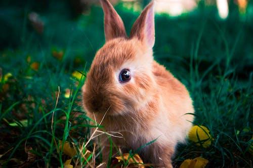 A Brown Rabbit on Green Grass