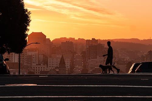 Immagine gratuita di alba, camminando, cane