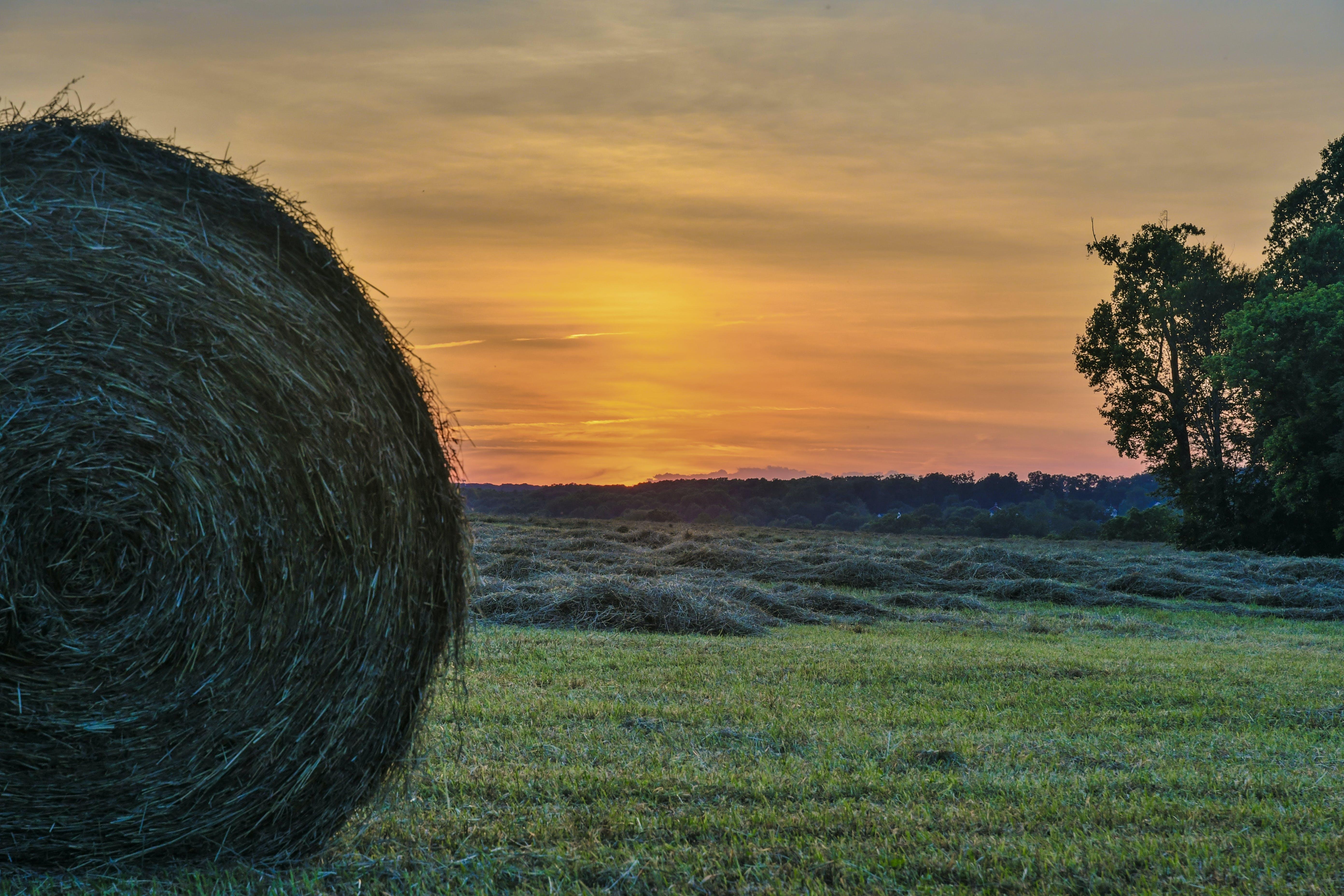 Hayfield During Sunset