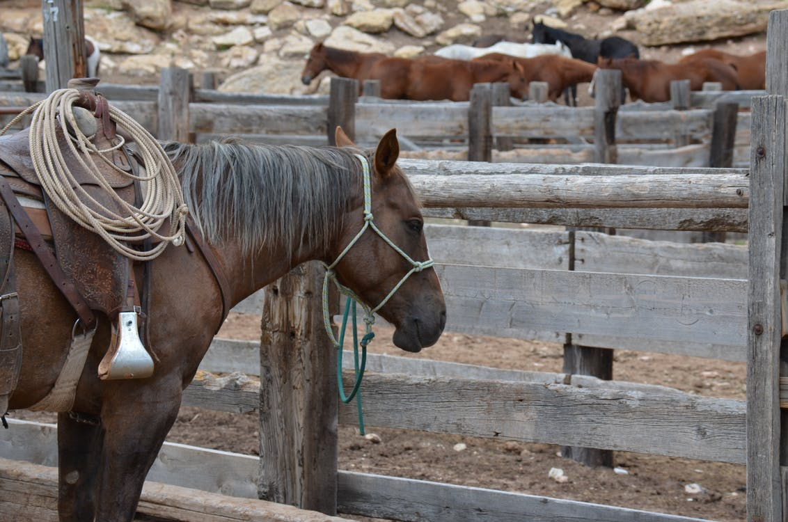 Brown Horse Inside Wooden Fence