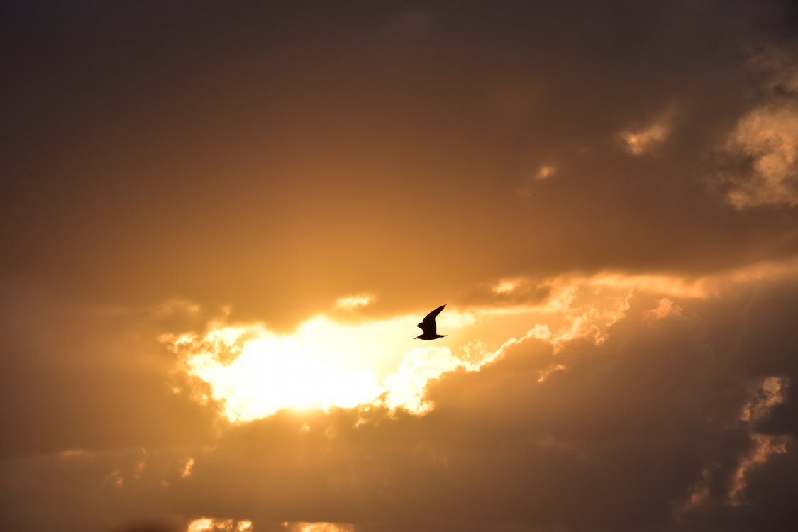 Free stock photo of seagull, sunrise