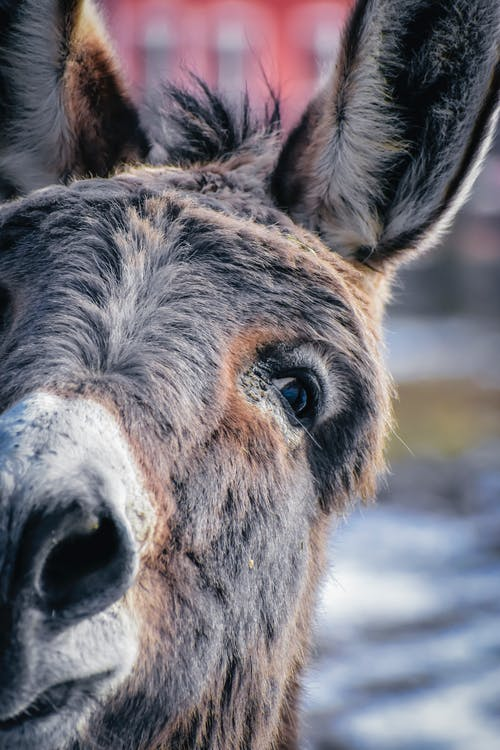 Head of donkey standing in enclosure