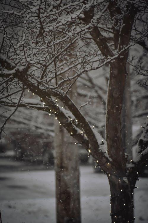 Бесплатное стоковое фото с ветвь, дерево, жуткий, зима