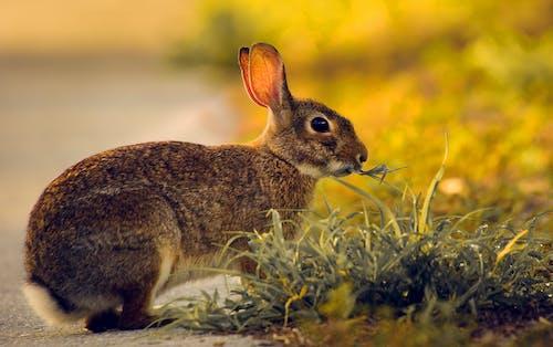 ウサギ, かわいらしい, 動物の無料の写真素材