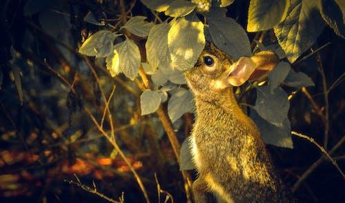 Gratis lagerfoto af blad, dyr, dyreliv, efterår