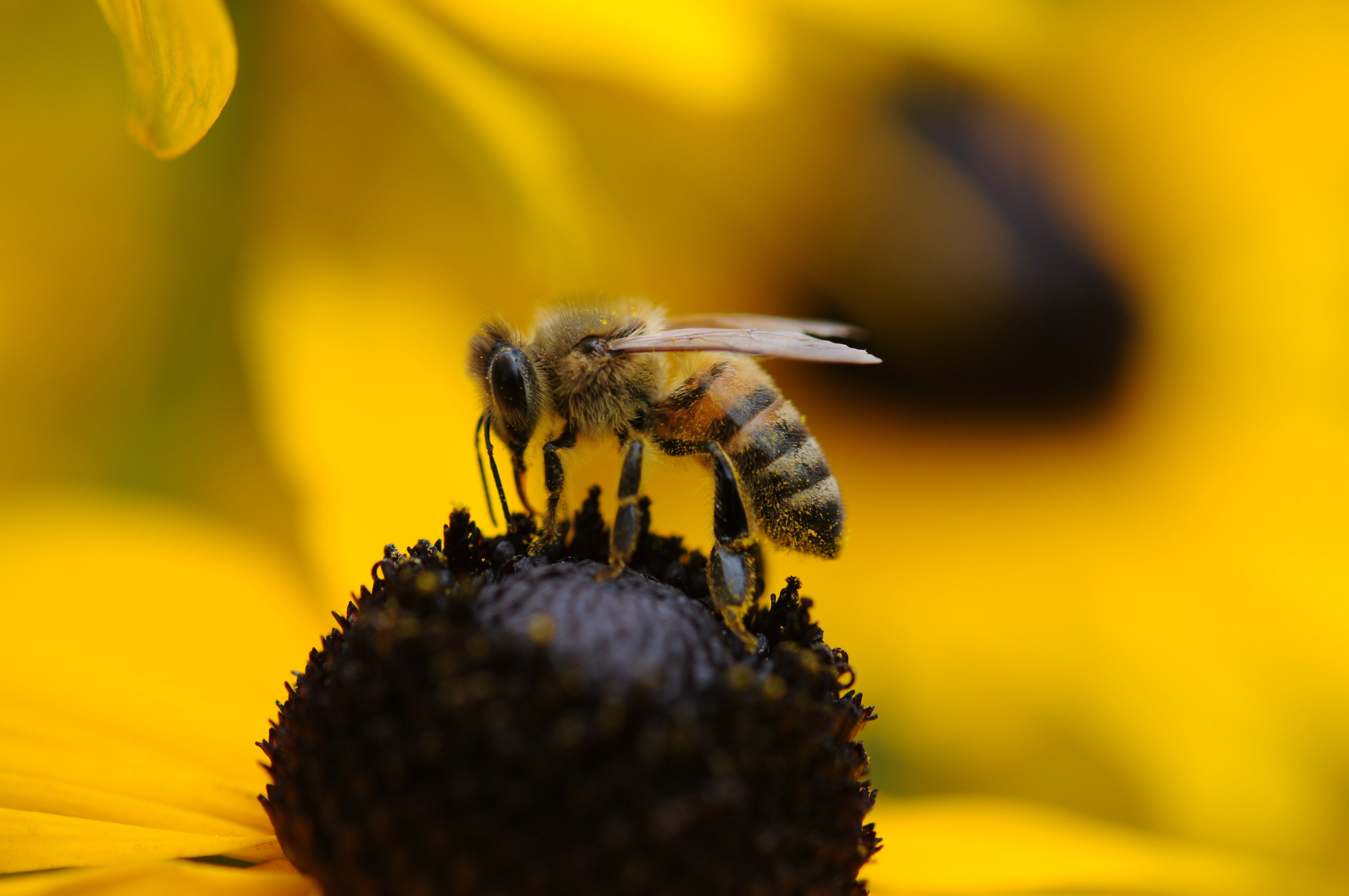 Tilt Shift Lens Photography of Yellow and Black Bee