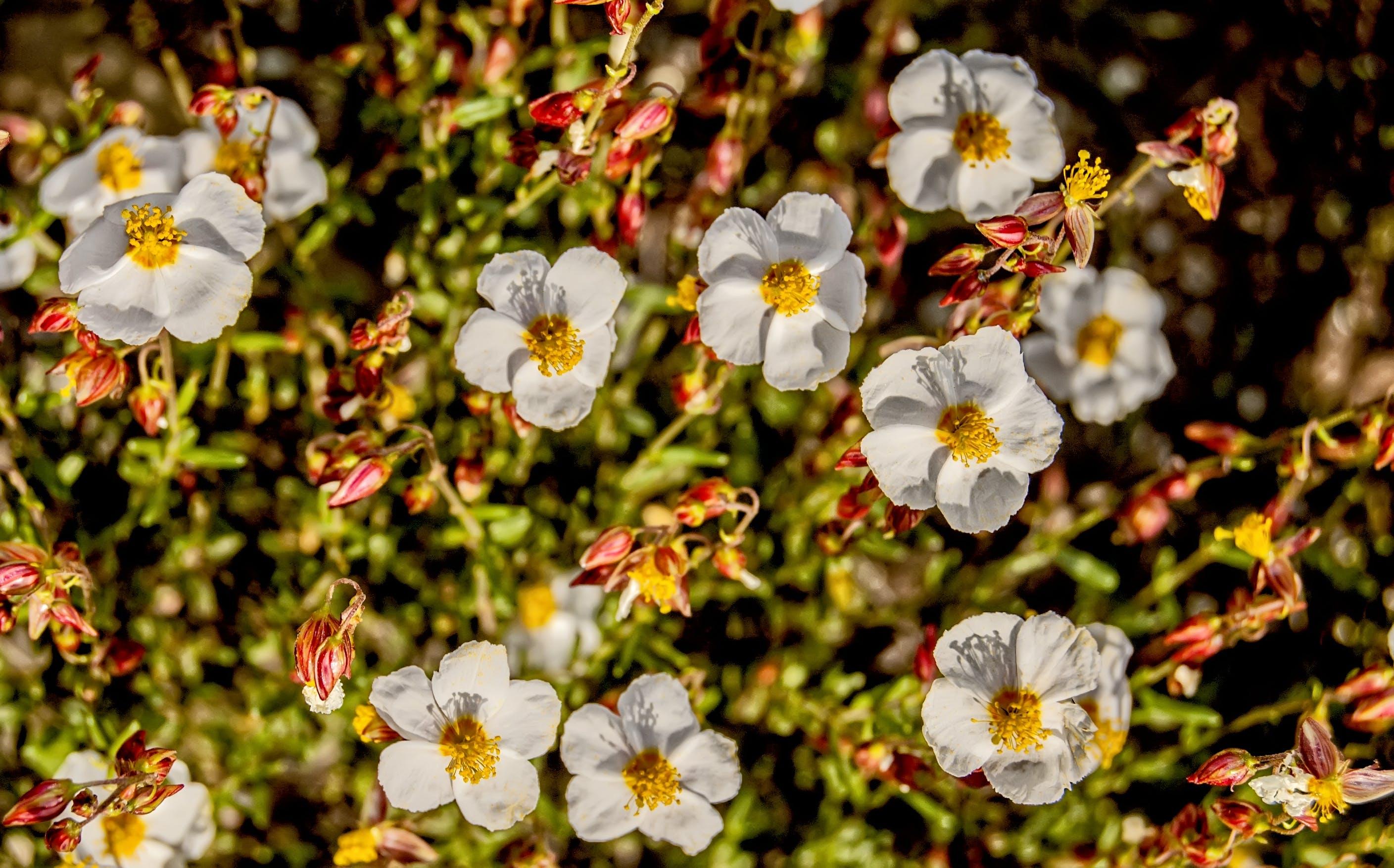 Kostenloses Stock Foto zu blumen, natur, pflanzen, wild