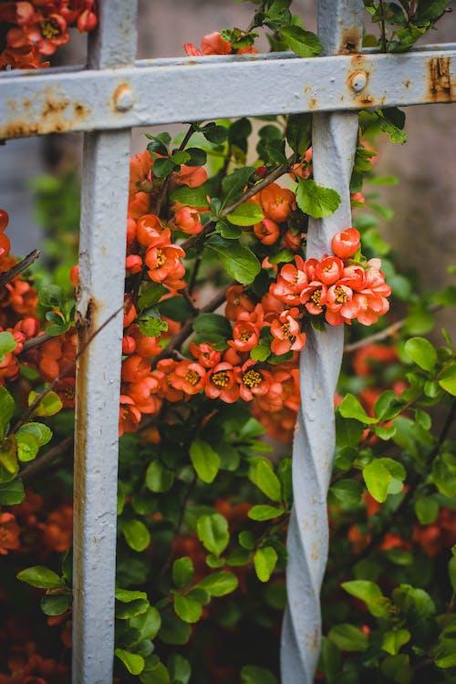 Ilmainen kuvapankkikuva tunnisteilla aita, kasvi, kasvikunta, kasvu