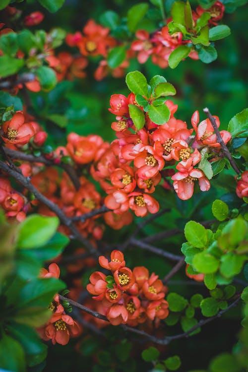增長, 工厂, 植物群, 綻放 的 免费素材照片