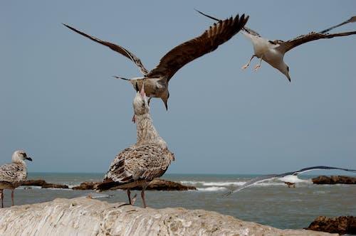 Бесплатное стоковое фото с чайки