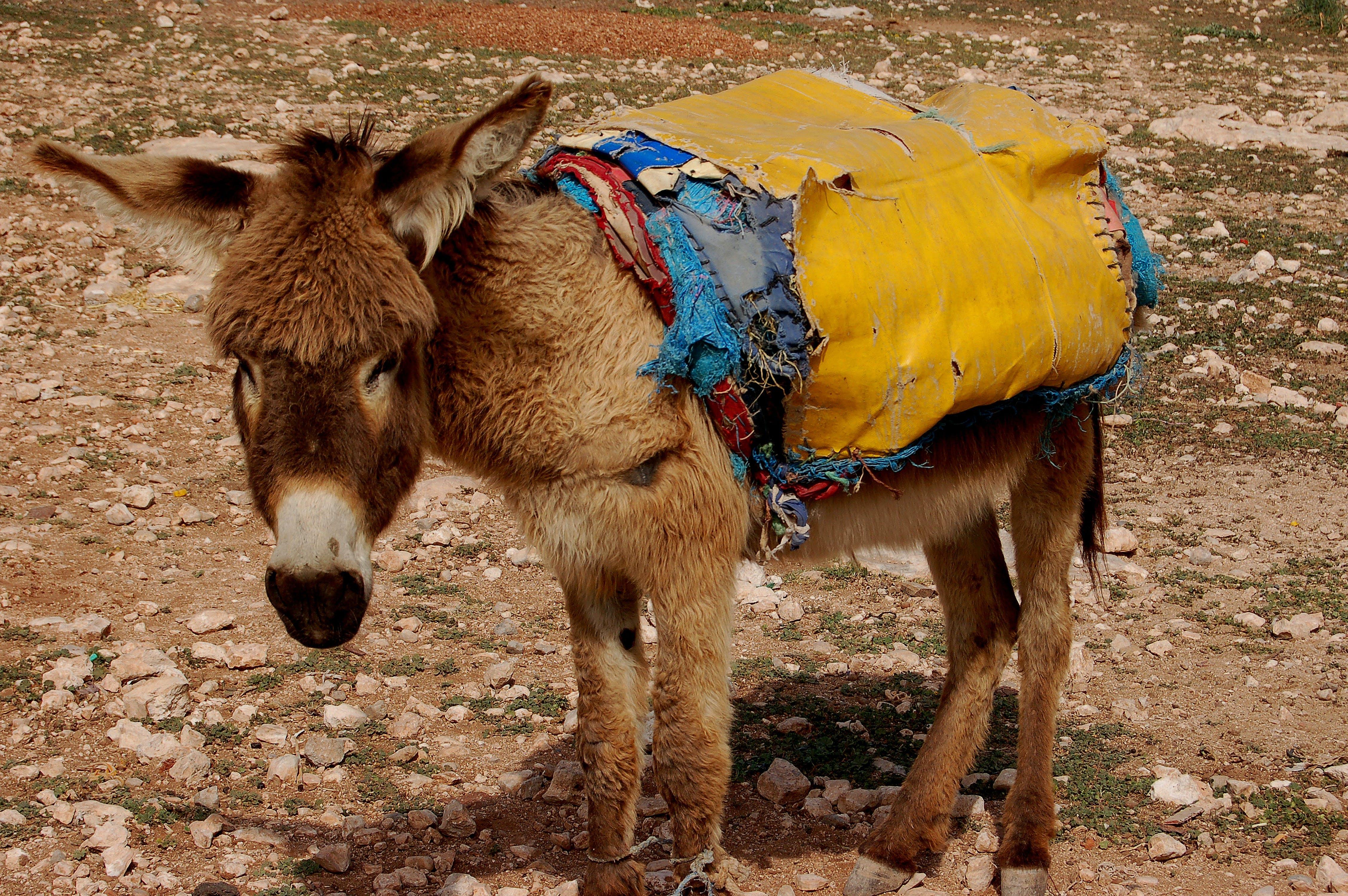 Fotos de stock gratuitas de animal, animal domestico, Desierto, fauna