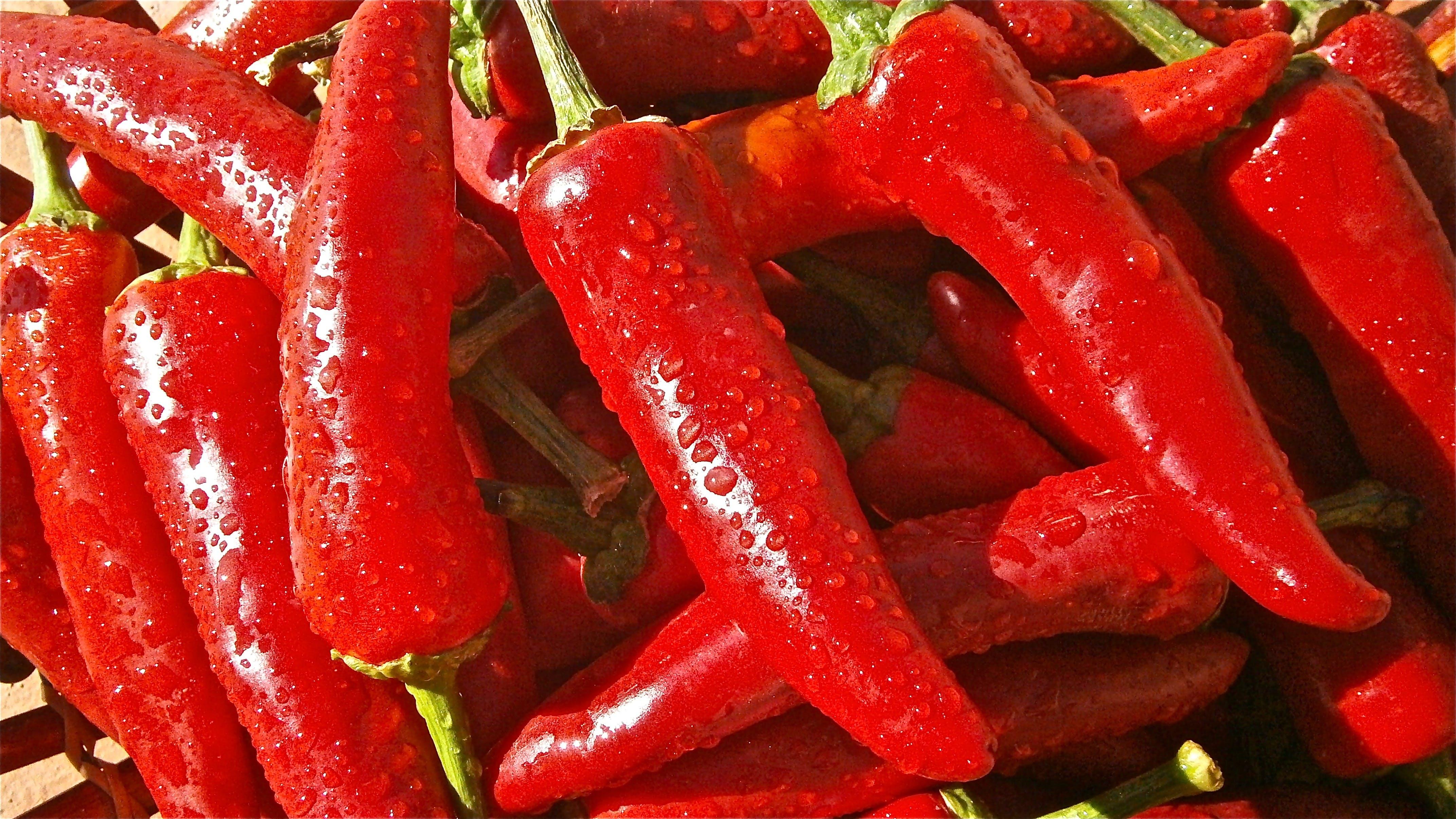 Kostenloses Stock Foto zu chili peper, essen, gemüse, nass