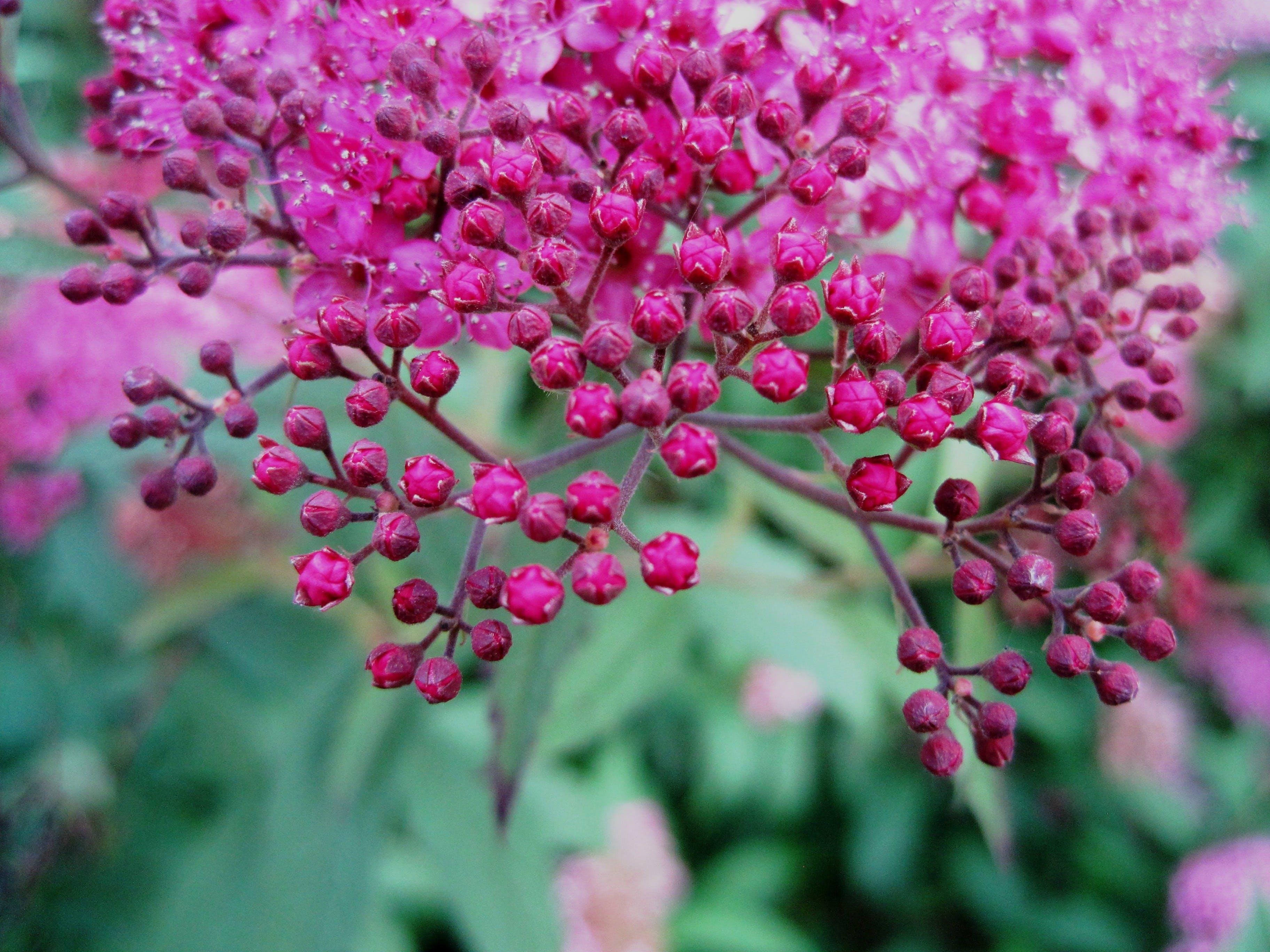 Ilmainen kuvapankkikuva tunnisteilla kasvi, kasvikunta, kukannuput, kukat