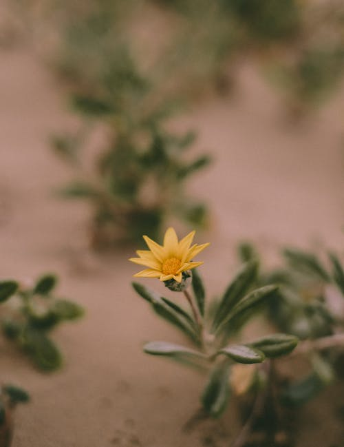 Free stock photo of blooming, blur, color, delicate
