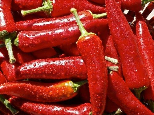Základová fotografie zdarma na téma červená, čili papričky, kapky vody, mokrý