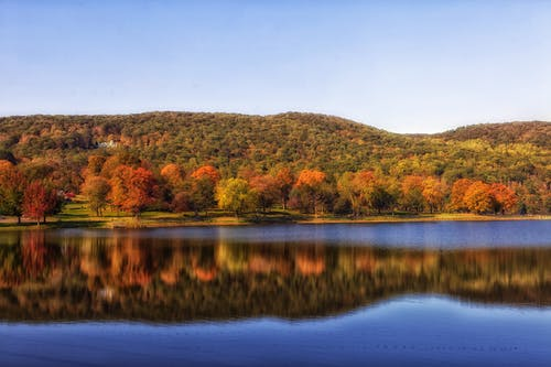 Gratis stockfoto met bomen, Bos, h2o, landschap