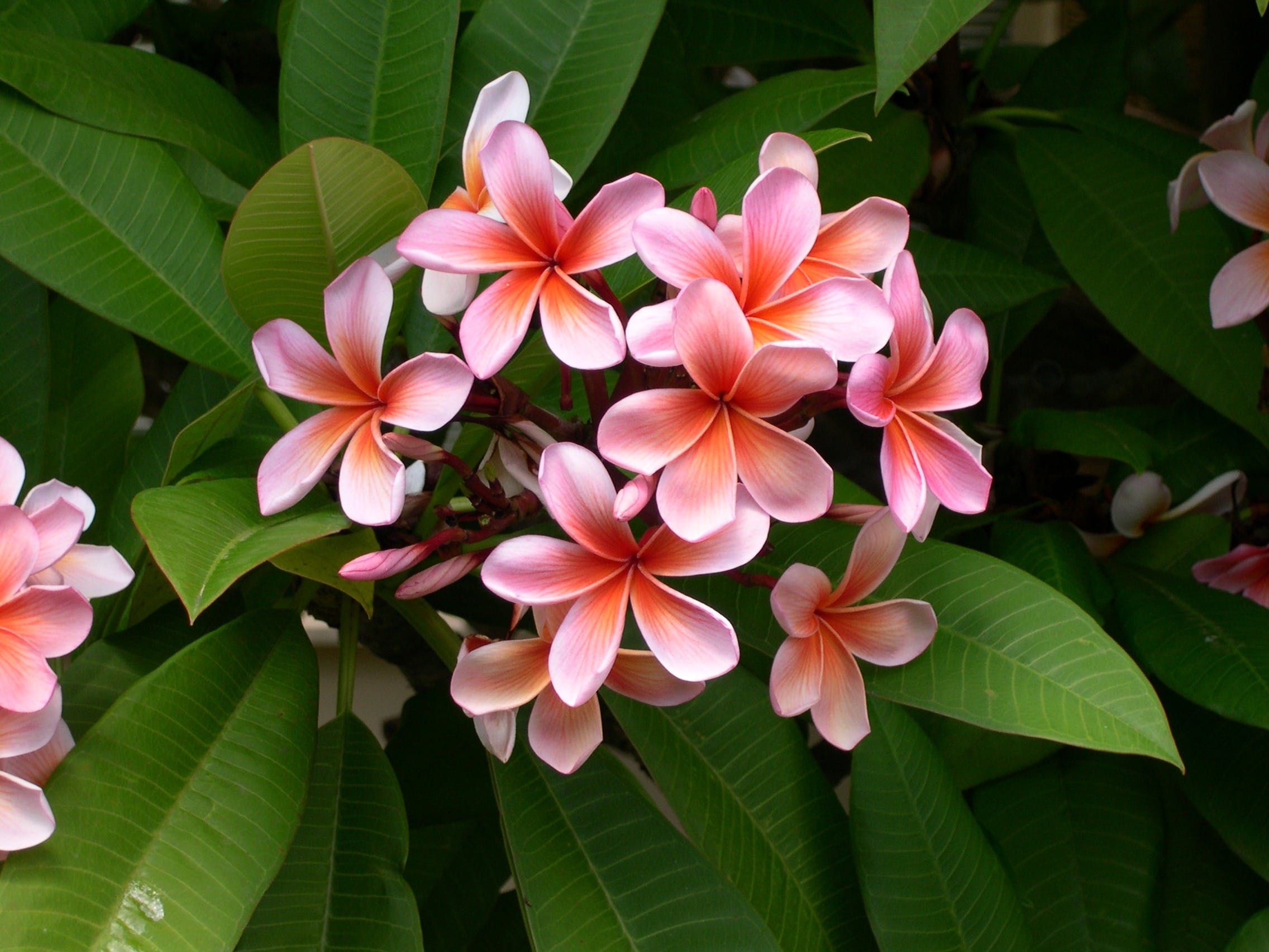Pink Flowers and Green Leaves
