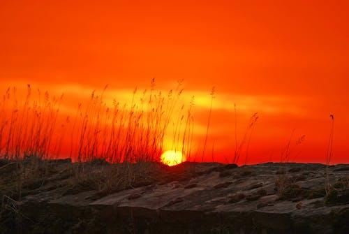 Δωρεάν στοκ φωτογραφιών με Ανατολή ηλίου, γρασίδι, δύση του ηλίου, ηλιοβασίλεμα