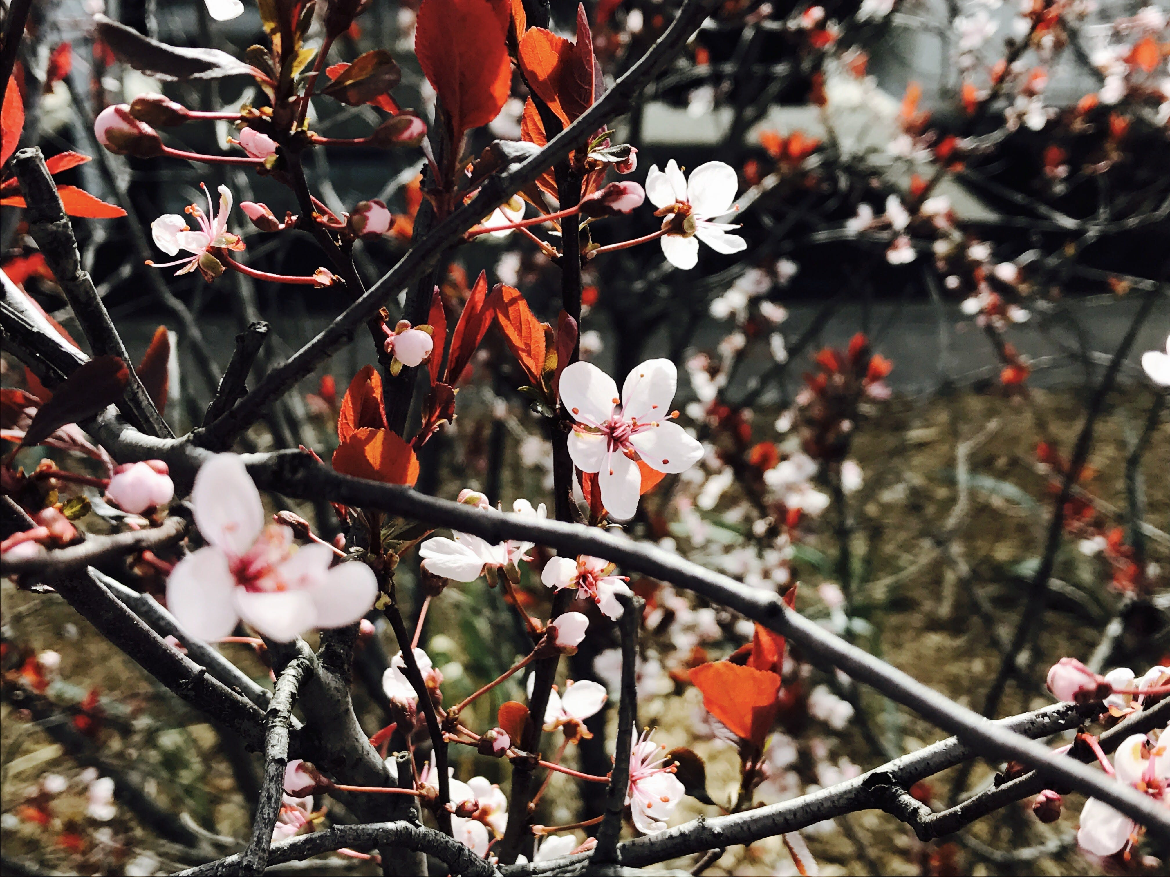 Flowers On A Tree