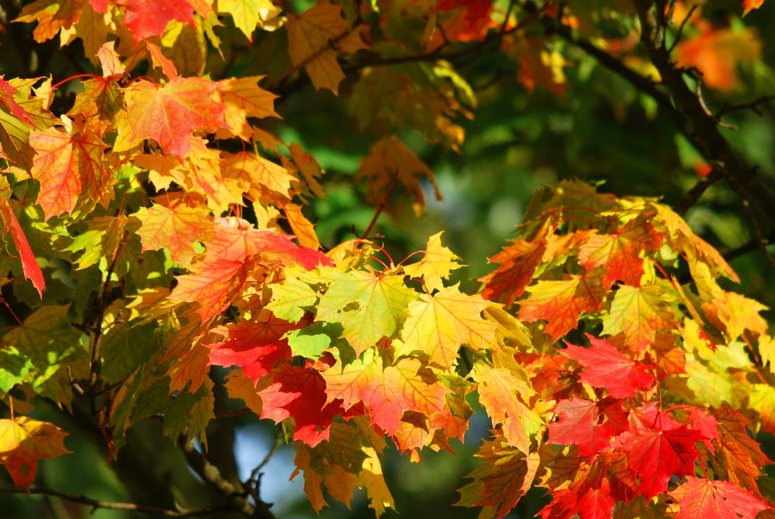Yellow and Red Leaf Trees